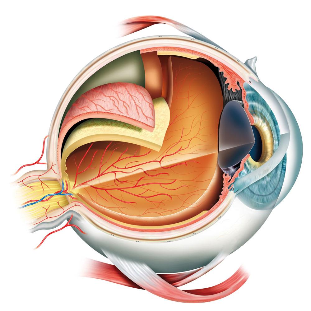 vitreoretinalnaya-hirurgyia-1