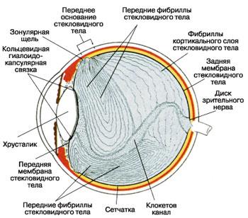 Диагностика и лечение гемофтальма